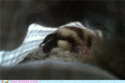 baby,finnish,meaning,name,noise,reader squees,sleeping,sugar glider