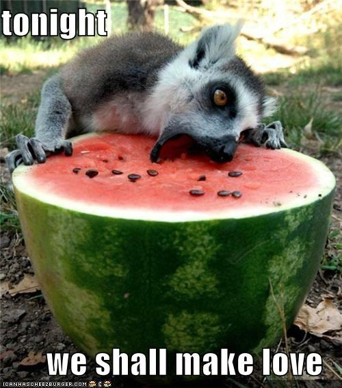 animals I Can Has Cheezburger lemurs make love sex tonight watermelon - 5038935552