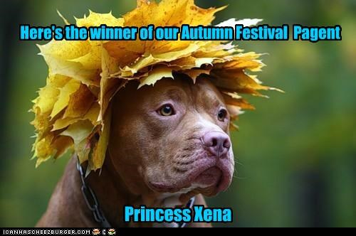 animals autumn dogs i has a hotdog leaves silly winner - 5038935808