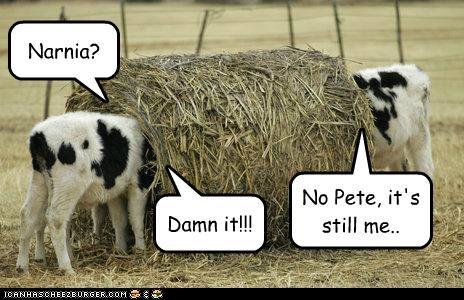 animals cows dumb FAIL hay I Can Has Cheezburger narnia - 5039040000