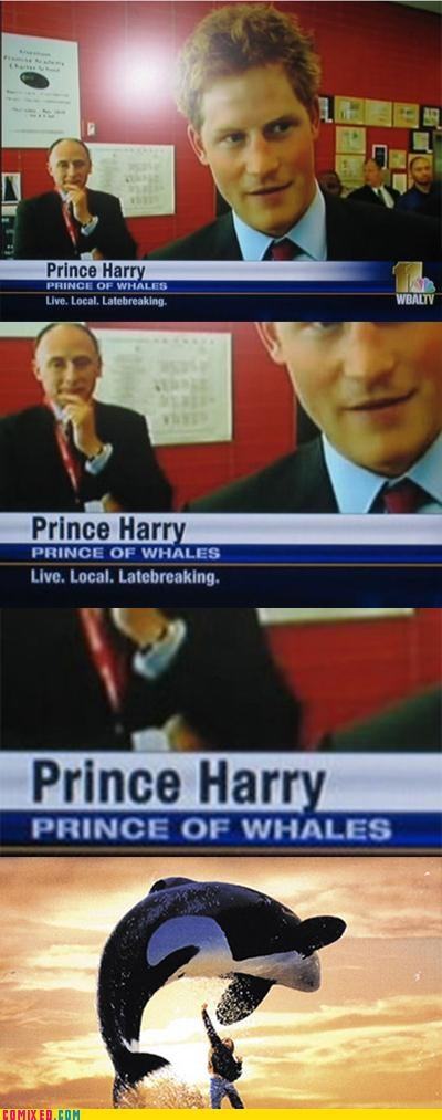celebutard free willy Prince Harry Wales whale - 5039245568