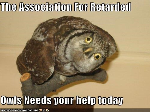 animals,association,help,I Can Has Cheezburger,owls,retarded,special