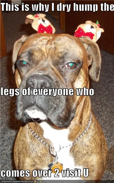 animals boxers dogs hats hump i has a hotdog legs this is why unhappy - 5039672832