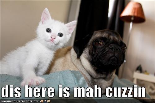 cat cousin cousins family friends kitteh pug - 5039755520