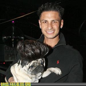 dogs,guido,jersey shore,pauly d,pets,Photo,pug