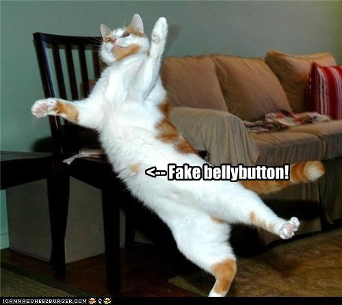 belly belly button button caption captioned cat fake lolwut tabby - 5040414976