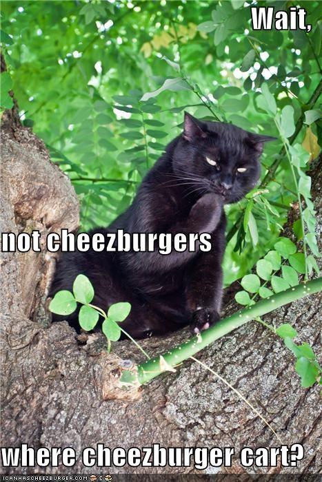 Cheezburger Image 5040523008