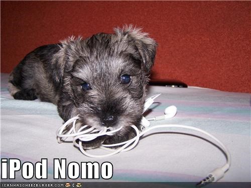 apple,chewing,ipod,noms,puppy,technology,whatbreed