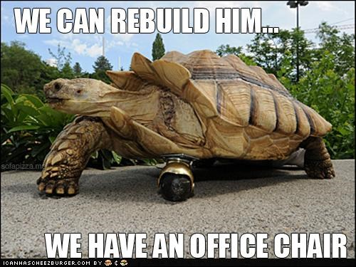 animals,I Can Has Cheezburger,legs,six million dollar tortoise,tortoise,we can rebuild him,wheels