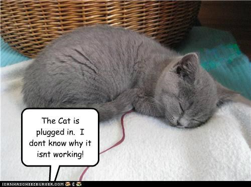 caption captioned cat confused cord dont-know not plug plugged sleeping working - 5041881856