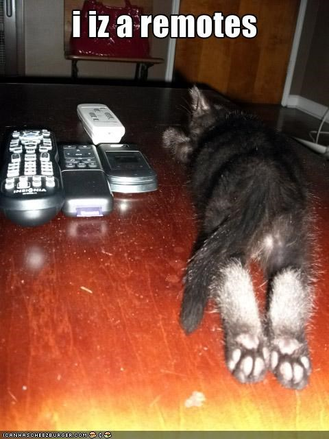 animals,camouflage,Cats,I Can Has Cheezburger,remotes