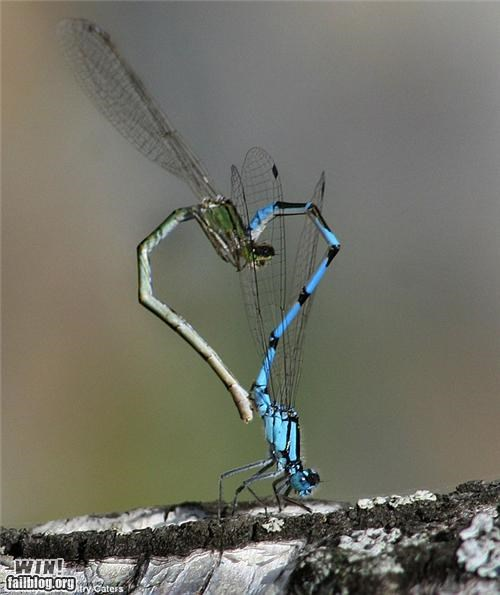 bugs dragonfly insects mother nature ftw twoo wuv - 5042164736