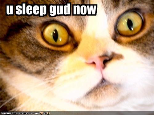 animals Cats closeup creepy I Can Has Cheezburger sleep - 5042224896