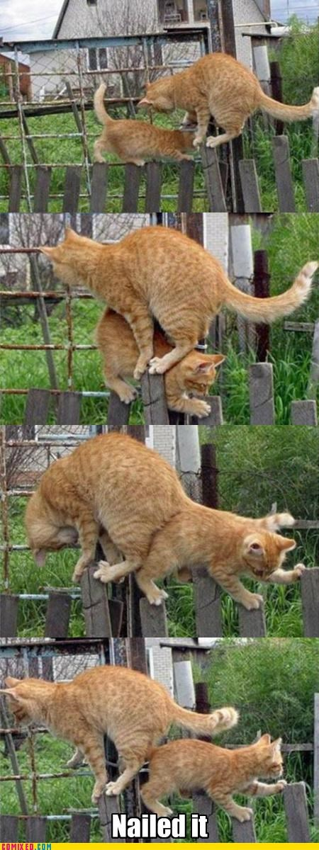 animals,boss,cat,fence,kitty,Nailed It