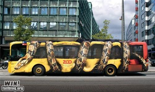 Ad,bus,snake,zoo