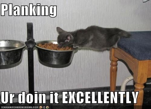 animals,Cats,eating,food,I Can Has Cheezburger,Memes,Planking,smart,trends,UR Doing It Right