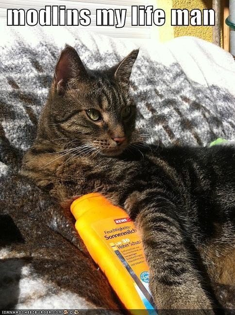 animals captions Cats I Can Has Cheezburger modeling sunscreen - 5042883328