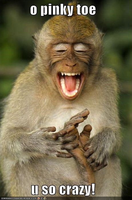 animals,I Can Has Cheezburger,laughing,monkeys,toes,wtf,you so crazy