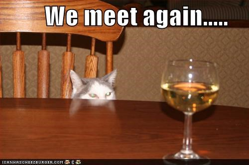 alcohol,animals,Cats,creepy,drinking,I Can Has Cheezburger,meet,wine