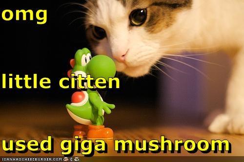 Cheezburger Image 5043092992
