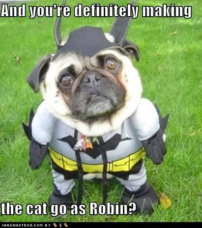 animals,batman,Cats,confused,costume,dogs,i has a hotdog,pugs