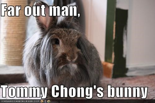 animals,bunny,I Can Has Cheezburger,look alikes,rabbits,tommy chong
