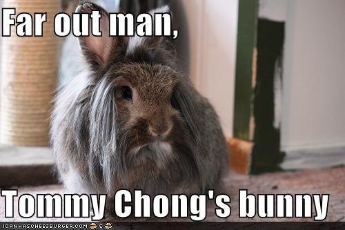 animals bunny I Can Has Cheezburger look alikes rabbits tommy chong - 5043288832