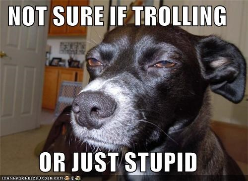 glare mixed breed skeptical stupid trolling what whatbreed - 5043311360