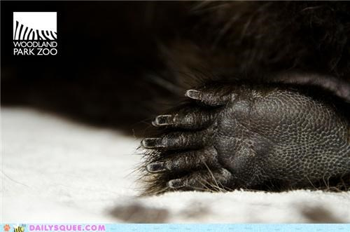 baby challenge contest foot game guess guess who guessing porcupine toes whatsit whatsit wednesday woodland park zoo