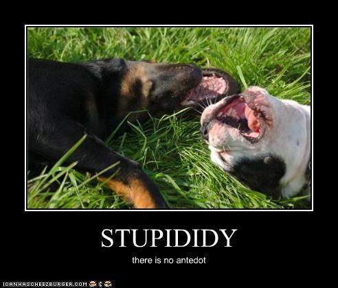 STUPIDIDY there is no antedot