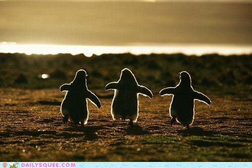 blue chick chicks Hall of Fame idiom penguin penguins sunset waddling walking wild yonder