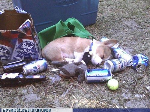 beer can,crunk critters,dogs,passed out,toys