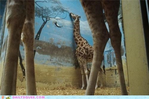 art,baby,cruel,evil,fate,giraffes,mural,prank,realism,realistic