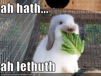 bunnies cages lettuce rabbits vegetables - 504369920