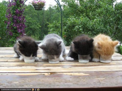 breakfast,breakfast club,cyoot kitteh of teh day,kitten,line,lots of cats,milk