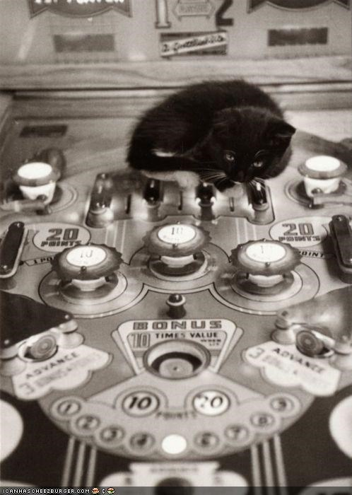 black and white,cyoot kitteh of teh day,games,machine,pinball
