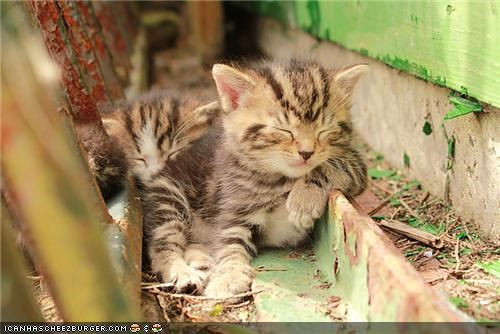 cyoot kitteh of teh day rustic sleeping two cats - 5043832576