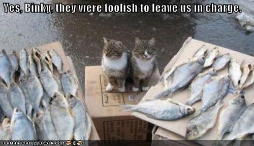 caption,captioned,cat,Cats,fish,foolish,humans,in charge,leading,leaving,left,noms,yes