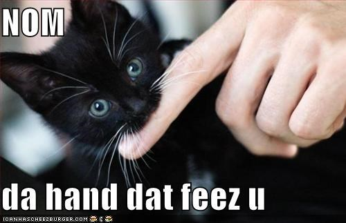 biting eating fingers hands kitten lolcats lolkittehs nom - 504548096