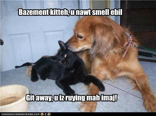 Bazement kitteh, u nawt smell ebil Git away, u iz ruying mah imaj!