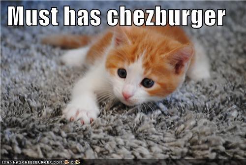 Cheezburger Image 5045970944