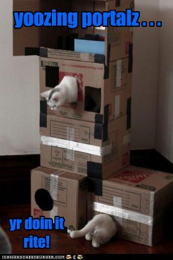 box boxes caption captioned cat Cats doing it right optical illusion portals using - 5046080512