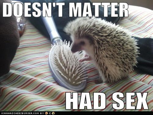 animals brush doesnt matter hedgehogs I Can Has Cheezburger Lonely Island sex - 5046254848