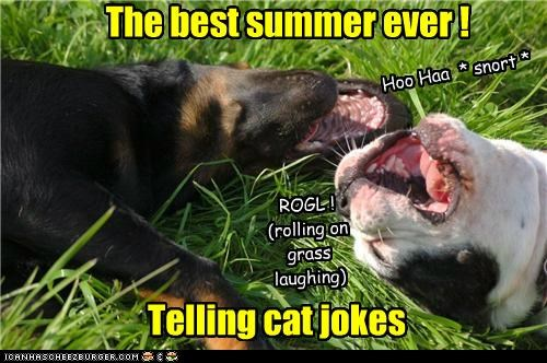 Telling cat jokes The best summer ever ! Hoo Haa * snort * ROGL ! (rolling on grass laughing)