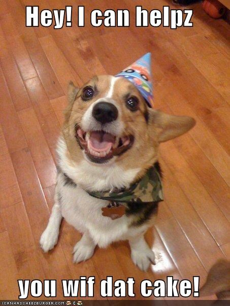 birthday,birthday hat,cake,corgi,food,happy dog,help,helping,i can help,people food,smiles,smiling,yummy