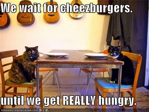 Cheezburger Image 5046315264