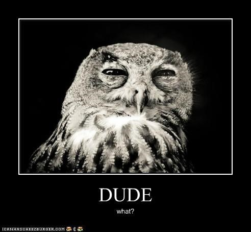 animals,baked,dude,dude what,high,I Can Has Cheezburger,owls,weed,what