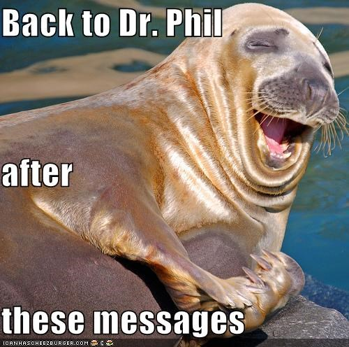 animals,dr phil,I Can Has Cheezburger,laughing,sea lions,seals,TV