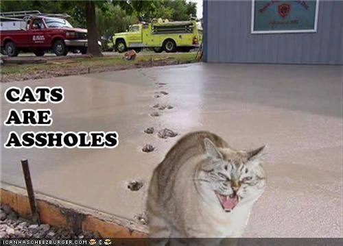 animals,Cats,cement,footprints,I Can Has Cheezburger,mean,mess,rude,wet cement