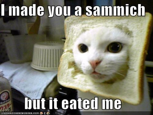 animals bread Cats I Can Has Cheezburger i made you a cookie sandwich wtf